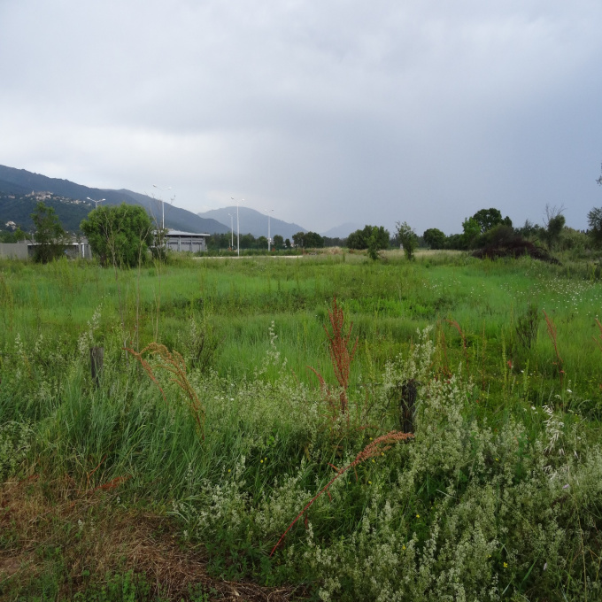 Offres de vente Terrain Lucciana (20290)